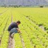 Voucher agricoltura, come funzionano