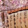 Libri in onore degli incontri giapponesi