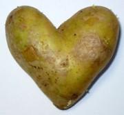 sagra patata palmiano