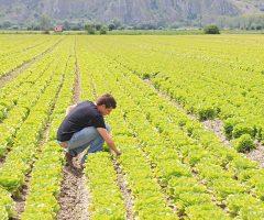 occupati agricoltura coldiretti