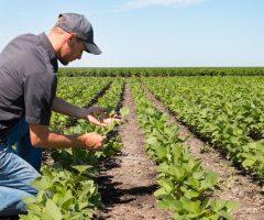 bandi imprese agricole marche