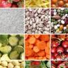 Disoccupati Marche, 10 corsi gratuiti nel Piceno per l'agroalimentare