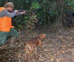caccia al cinghiale ascoli piceno
