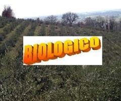coltivazione-biologica
