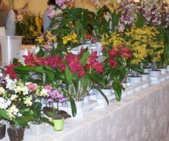 fioriepiante