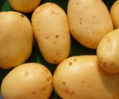 sagra della patata Palmiano