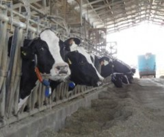 convegno sul latte