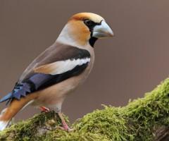 fiera-uccelli-comunanza