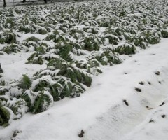 neve agricoltura