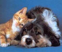 Foto per tutela degli animali