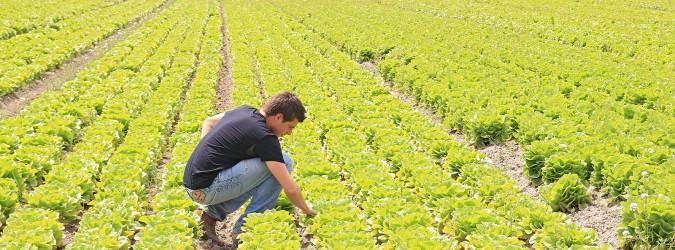regione marche bando agricoltori