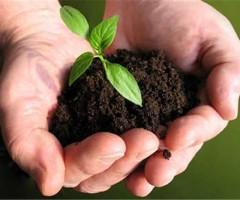 agricoltura green festival - agricoltura sociale - bandi agricoltura marche