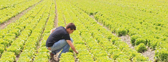 voucher agricoltura - occupati agricoltura coldiretti