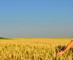 giovani agricoltori marche