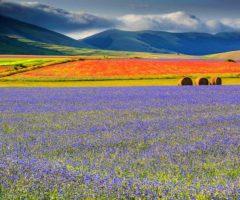 Corsa e camminata della fioritura, Castelluccio di Norcia
