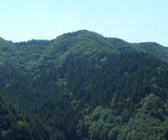 Gestione boschiva Marche