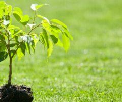Noi di Ascoli, un albero per ogni nato