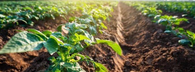 Coronavirus e agricoltura