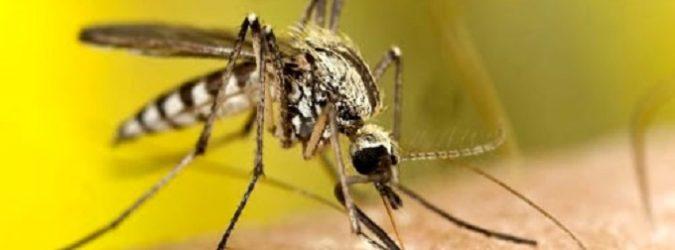 Zanzare Coronavirus