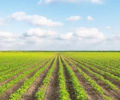 Agricoltura Marche
