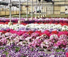imprese florovivaistiche