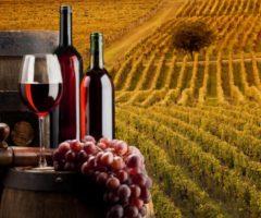 vini delle marche